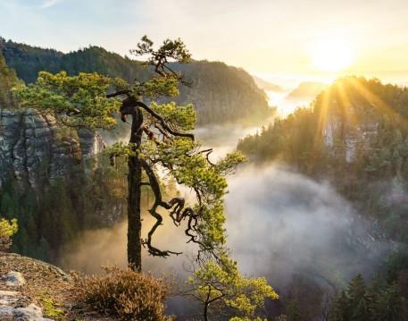 Nature / Landscapes