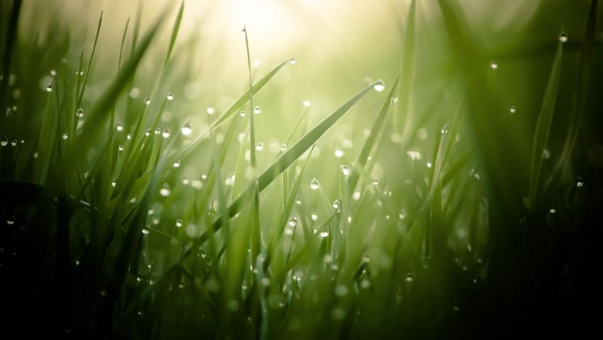 3840x2160 Morning Dew On Grass Threads 4K Ultra HD Desktop Wallpaper, Water Drop, Grass, Morning