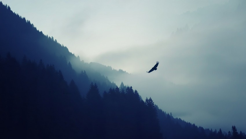 3840x2160 Mountain Forest Fog Valley Eagle 4K Ultra HD Desktop Wallpaper