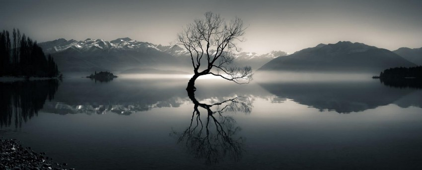 Silhouette of bare tree on body of water near mountain at daytime