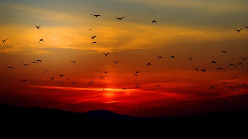 Sunset Twilight Red Sky Flying A Flock Birds, Sunset, Birds, Orange, Black, Nature