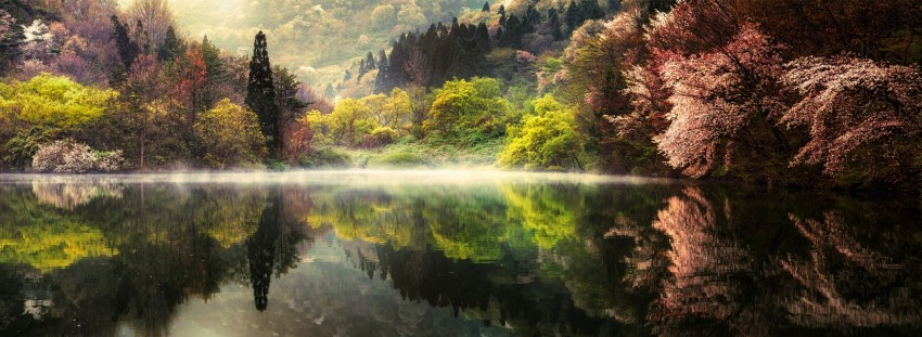 Tall trees reflecting on calm body of water in landscape photography