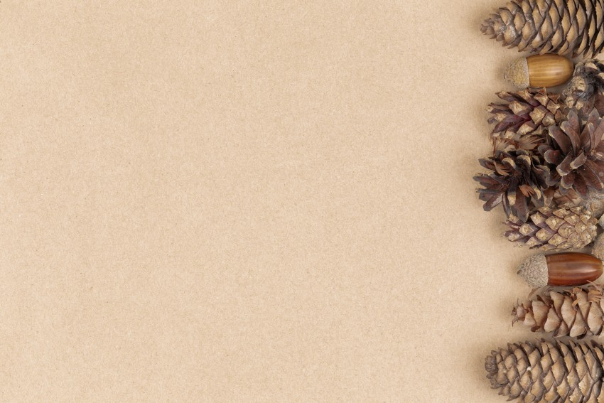 Thanksgiving HD Wallpapers, Autumn composition, frame made of pine cones and chestnuts Flat lay