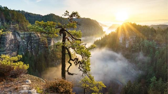 3840x2160 4k Nature Wallpaper Dump, Forest, Valley, Morning, Tree, Fog, Mountain