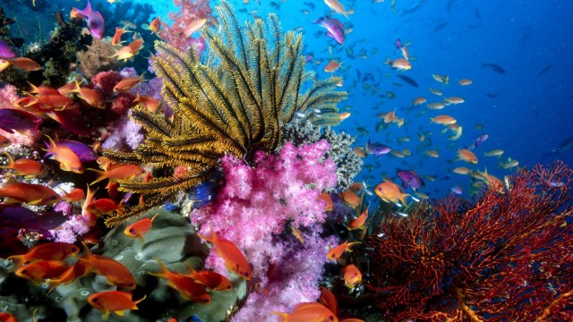 1920x1080 Sea Life HD Wallpaper and Background Image, Under Water, Water Life, Fish, Sea