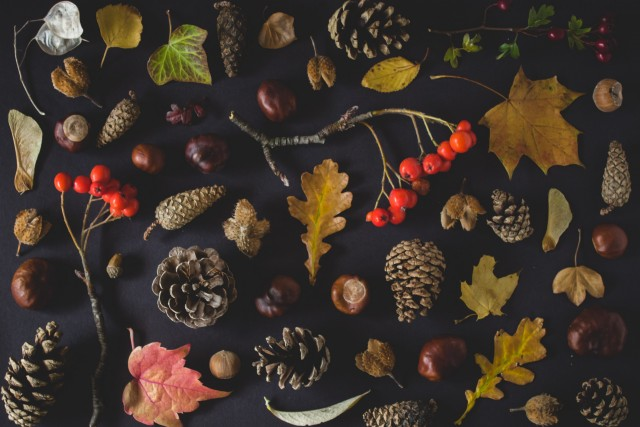 Thanksgiving HD Wallpapers, Images & Pictures, Background