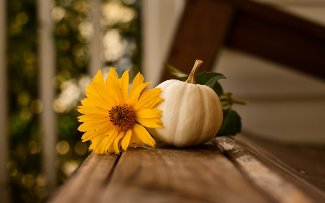 Thanksgiving HD Wallpapers, Images & Pictures, Background, thanksgiving free desktop wallpaper