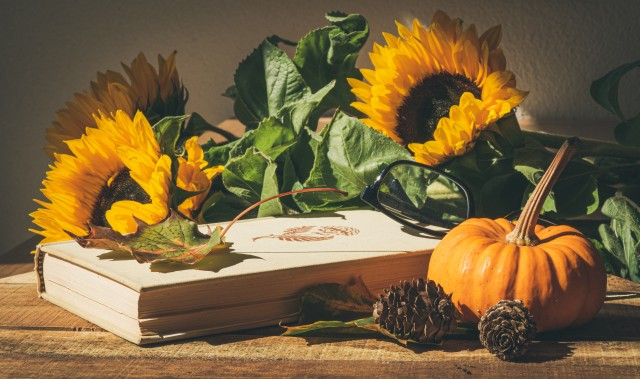 Thanksgiving HD Wallpapers, Pumpkin Images & Pictures, Background, free desktop wallpaper