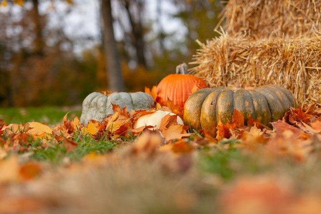 Thanksgiving HD Wallpapers, Fall Images & Pictures, Pumpkin