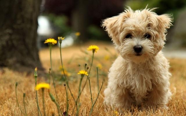 Cute puppies wallpapers for desktop